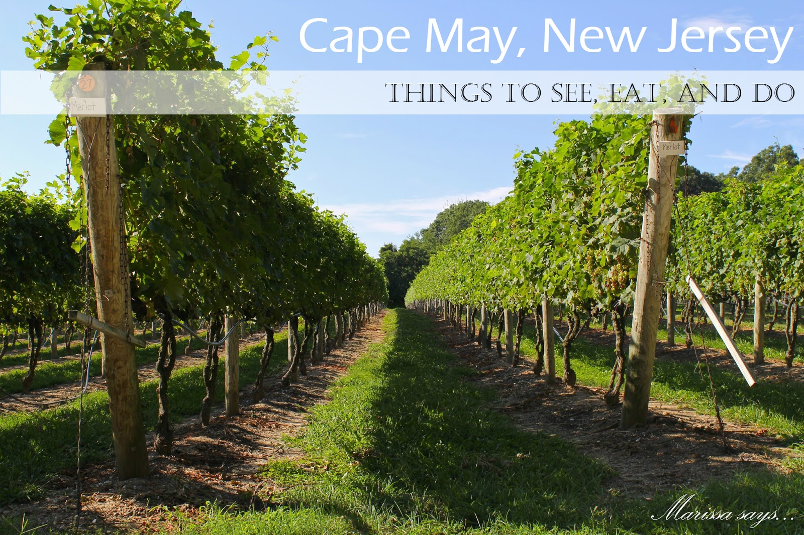 vinyard in cape may new jersey