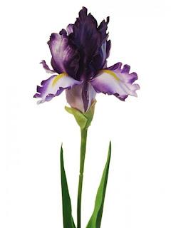 Iris de tela