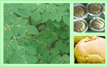 usaha kue daun kelor
