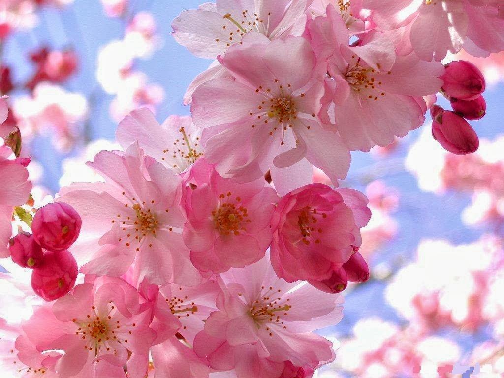 Dê Quinta: Ah, Primavera! ♥