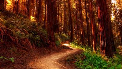 Camino hacia el bosque de los elfos y las hadas