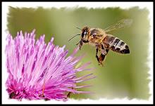 *Honeybee*