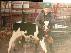 Halter Training a Calf...