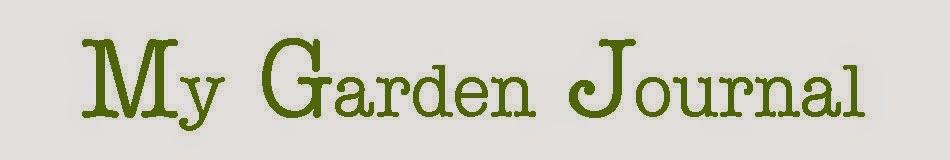 My journey into gardening