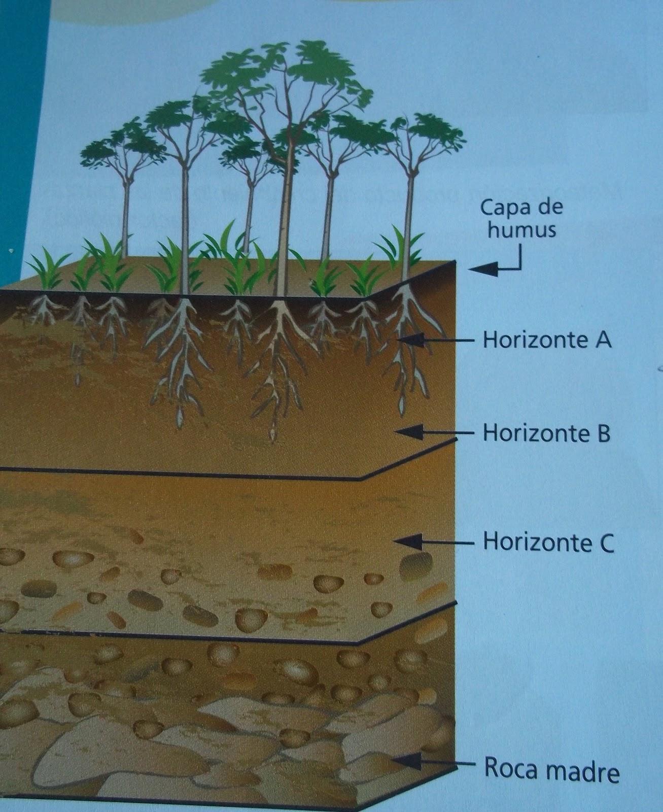 Octubre 2012 jardin de casa for Como se forma y desarrolla el suelo