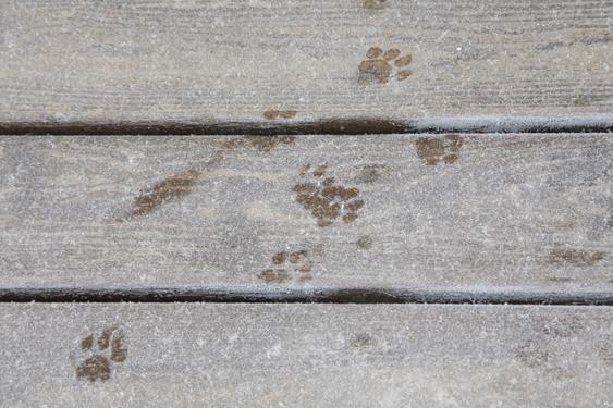 Loukutus voi olla ainoa vaihtoehto saada karannut kissa kiinni.