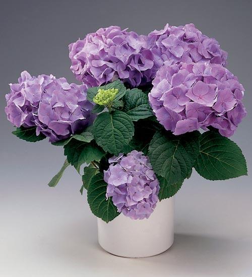 köpa blommor billigt