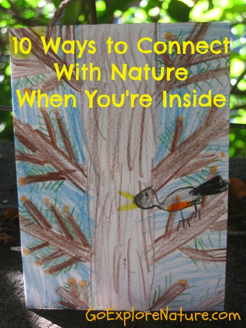 10 ways to connect with nature when you're inside