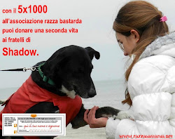 Salva un Cane