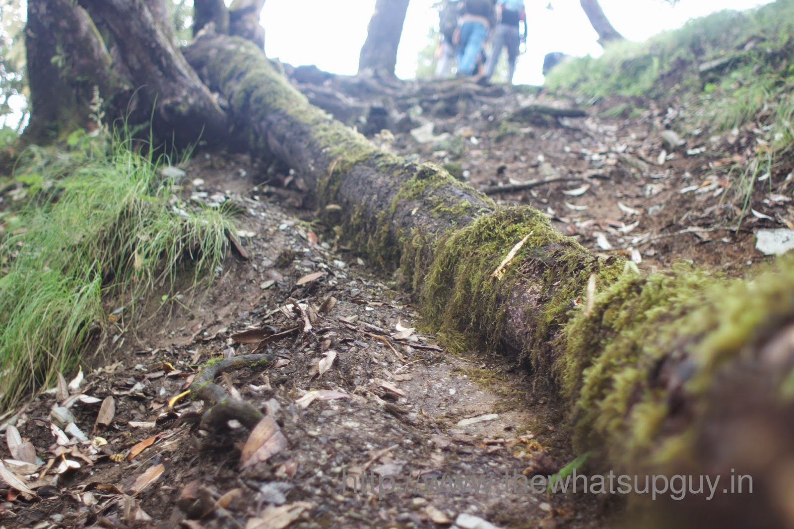 Fallen-Tree-Roopkund-Trek-With-India-Hikes-Day-2