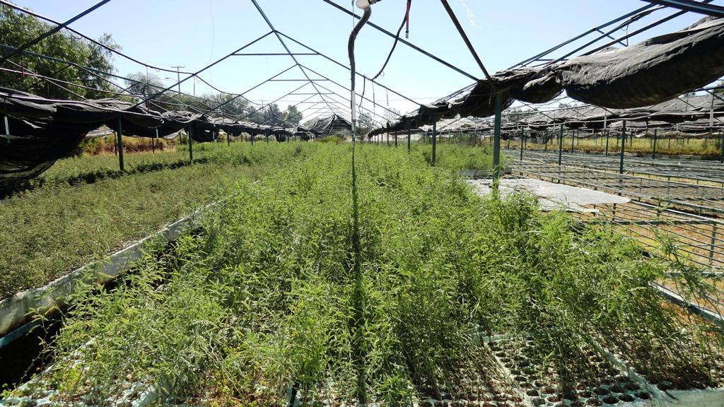 La grilla semae capacita a personal de viveros forestales for Proyecto productivo de vivero forestal