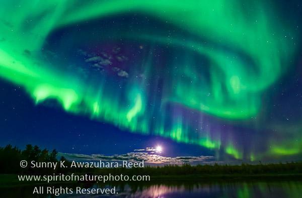 September Aurora   Fairbanks, Alaska. The Northern Lights ...