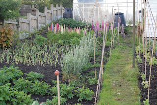 New gardens can lead to soil erosion