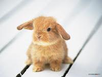 kelinci bersin