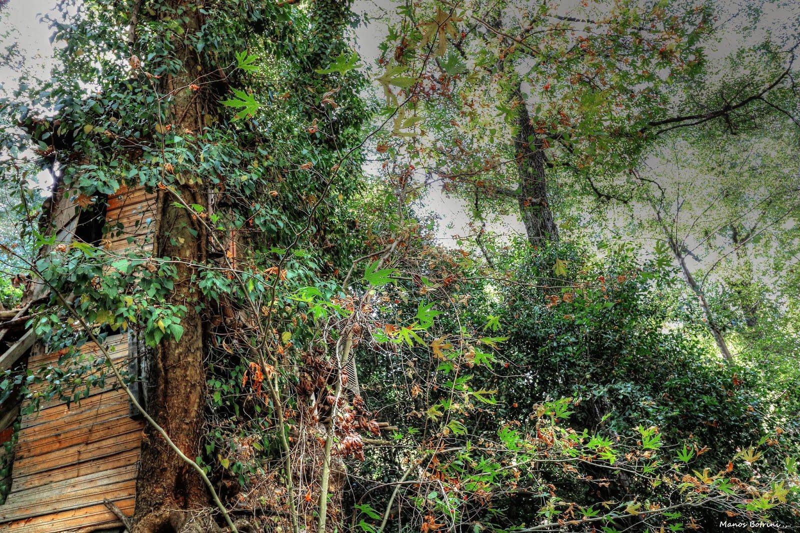 Πασχαλινή περιπέτεια βγαλμένη από παραμύθι: Παιδάκι χάθηκε στο δάσος και αποκοιμήθηκε