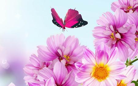 foto hewan - gambar kupu-kupu dan bunga
