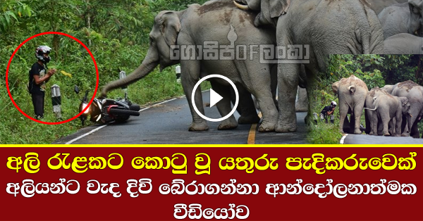 Man saves his life from wild elephant attack