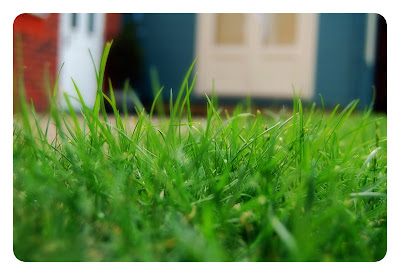My lawn up close