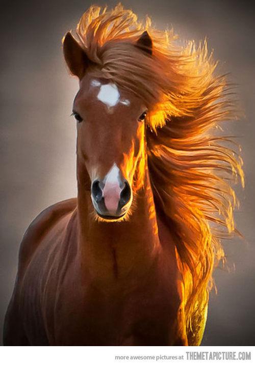 Na imagem: O close do rosto de um cavalo com os cabelos ao ar e banhados pelo dourado do sol