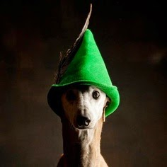 http://www.miamiherald.com/2014/02/15/3938903/greyhound-deaths-and-floridas.html