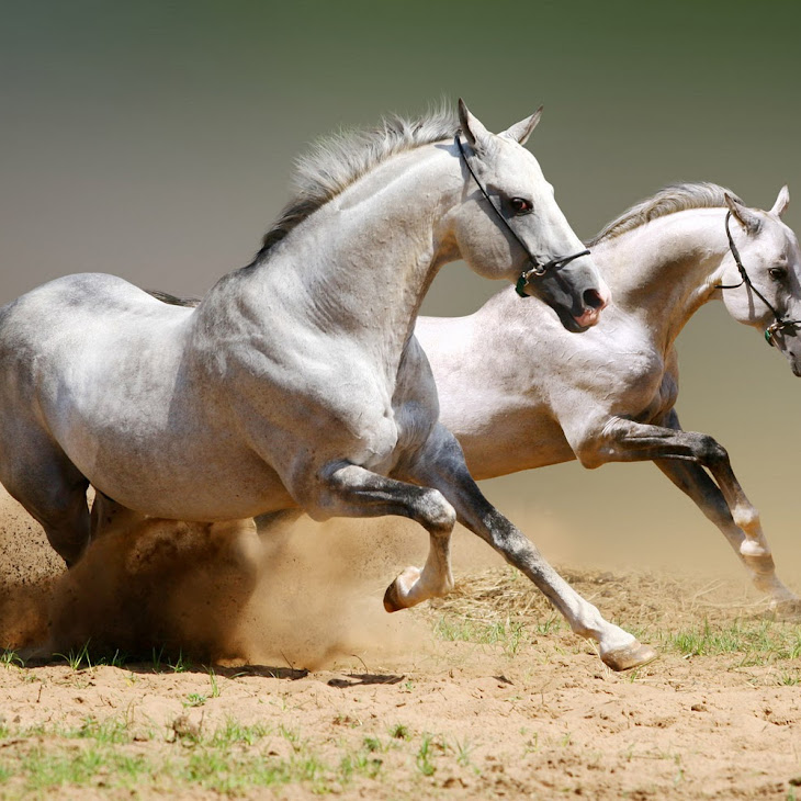 Download Horse Photo