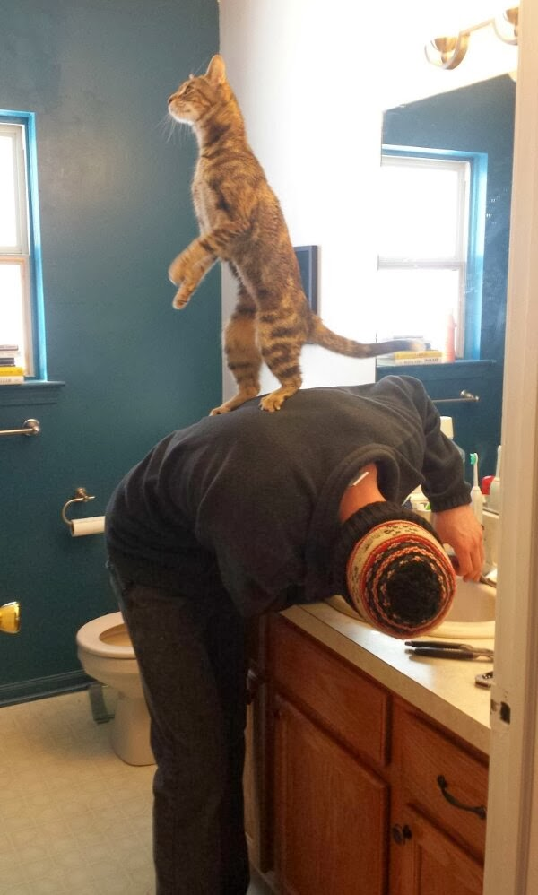 Funny cats - part 91 (40 pics + 10 gifs), cat standing on human back