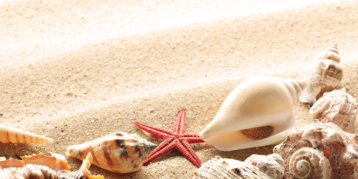 Shell 300+ Muhteşem HD Twitter Kapak Fotoğrafları