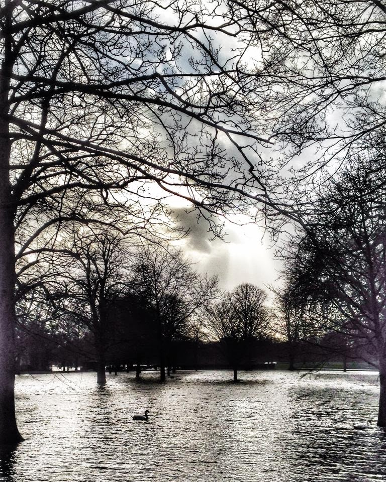 branches trees- Thames Floods 2014