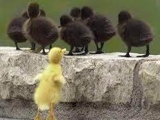 Imagenes Graciosas de Animales. Patos