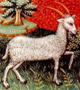 Horoscop 2015 - capricorn