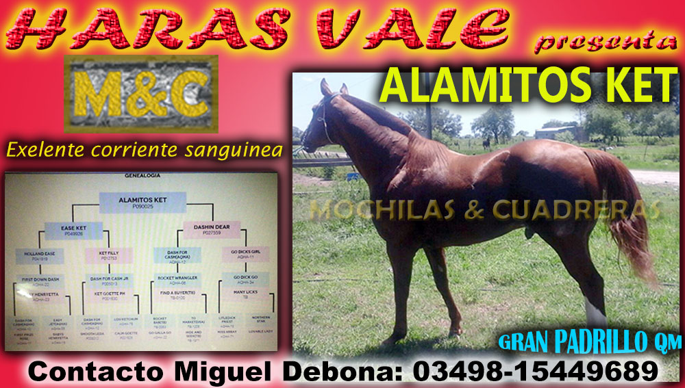HARAS VALE - PADRILLO QM - 20-12-15