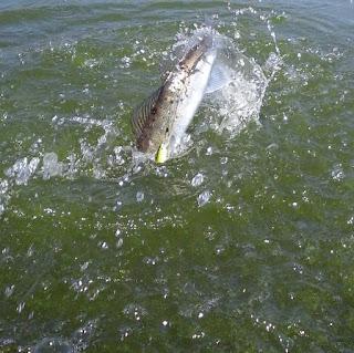 Verghe di bordo per pesca estiva
