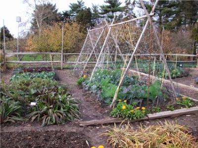 Φτιάχνω λαχανόκηπο χωρίς νερό