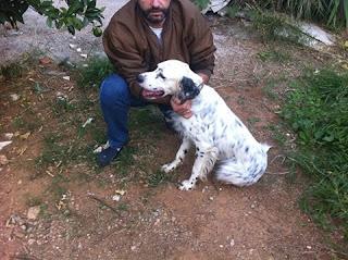 Χάθηκε την Δευτέρα 5/10/15 από το Πανόραμα Πετρούπολης το εικονιζόμενο σκυλάκι. Το έχει δει κανείς?