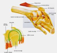 Kemik Temizliği Nasıl Yapılır, Eklem ve Kemik Temizliği,Kemik ve Eklemlerimizi Nasıl Korumalıyız