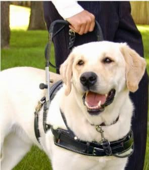 Fake Service Dogs Stakeholders