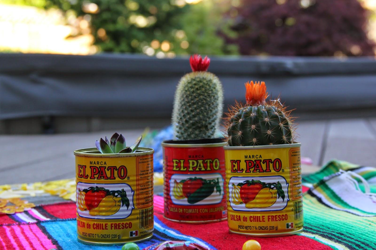 Cactus, Succulents, piñata
