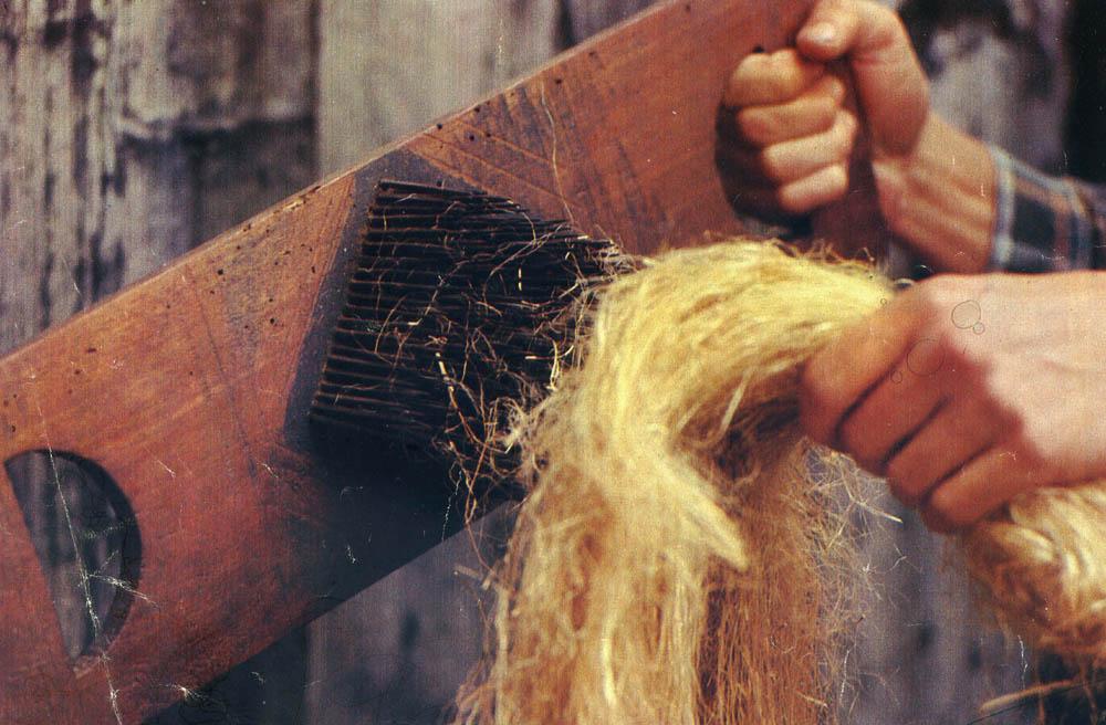 Storia del lino