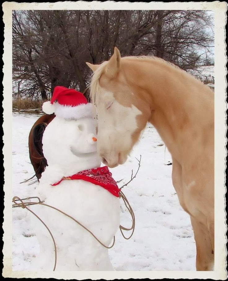 North Horse: Merry Christmas