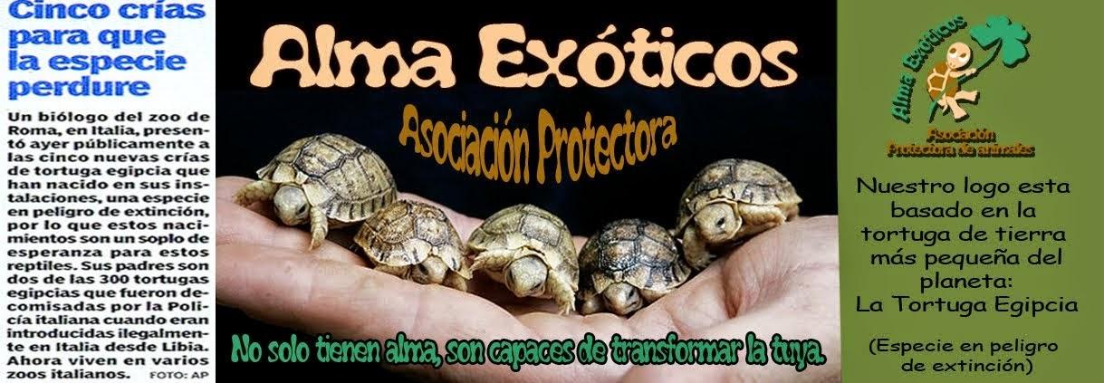 http://almaexoticos.blogspot.com.es/
