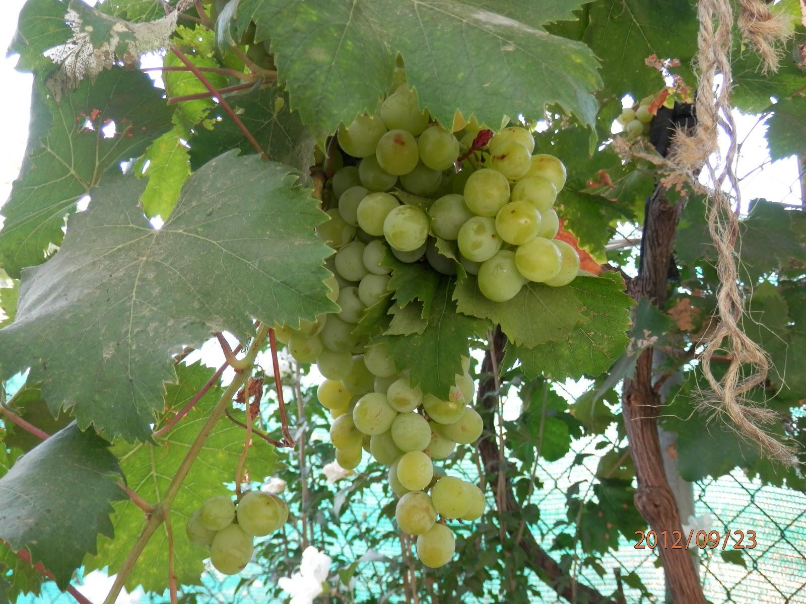 La huerta bricoecologica arboles frutales for Cuando se podan los arboles frutales