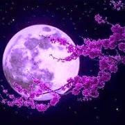 Este Blog publica Opciones Nocturnas los días de luna llena