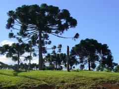Pinheiros de Itararé, Cidade Poema