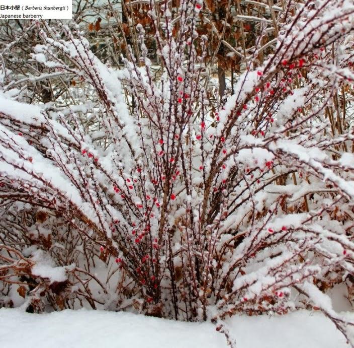 My Carolina Yard Winter Gardening – Plants for Winter Garden
