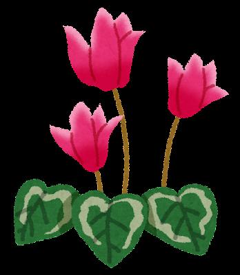 シクラメンのイラスト(花)