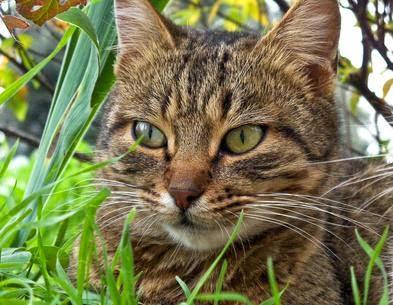 cara menghilangkan ketombe pada kucing
