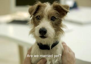 el perro Arthur en la película 'Beginners'