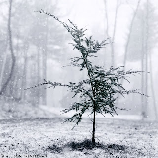 śnieg, zimowe inspiracjeśnieg, zimowe inspiracje