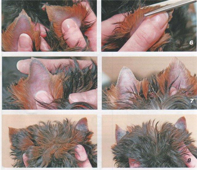 Как подстричь йорка пошагово