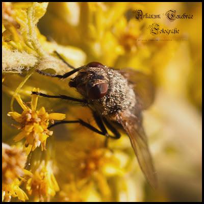 eine Nahaufnahme einer Fliege